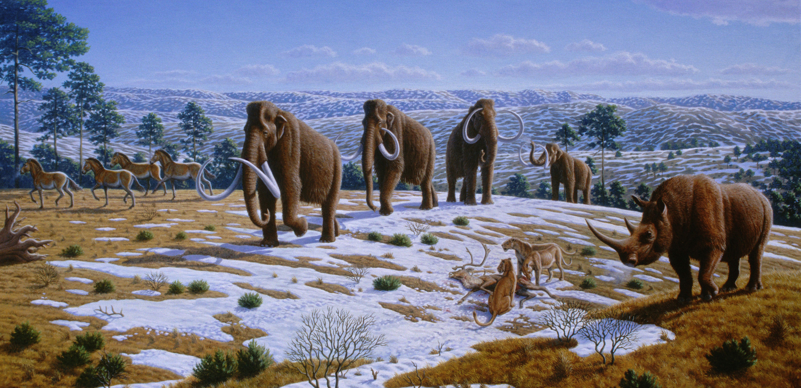 Artist's impression of a late Pleistocene landscape with woolly mammoths, equids, a woolly rhinoceros, and European cave lions.