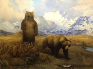 Bears at AMNH